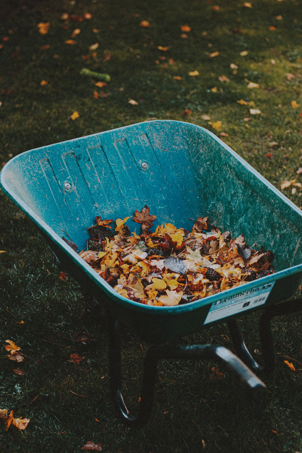 dried leaves on blue plastic container