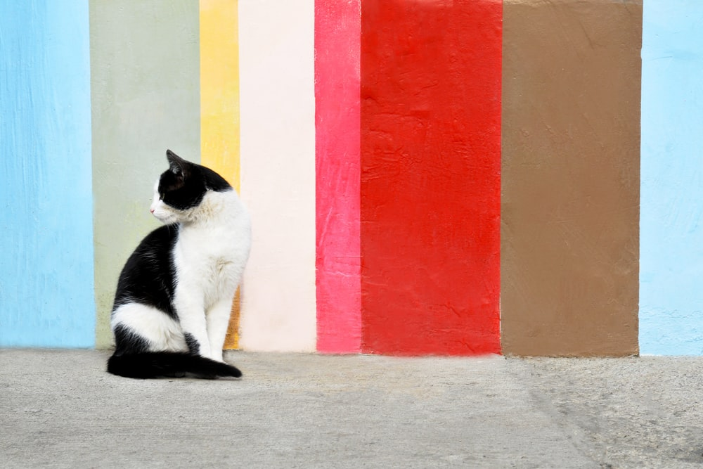 black and white cat sitting beside orange and red wall