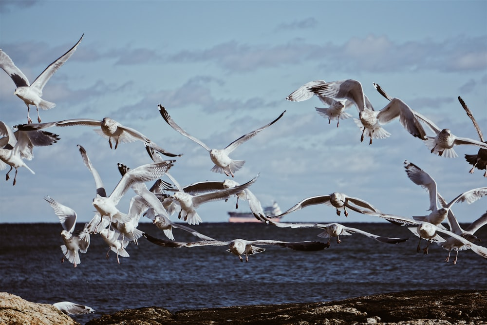 flock of white birds flying over the sea during daytime
