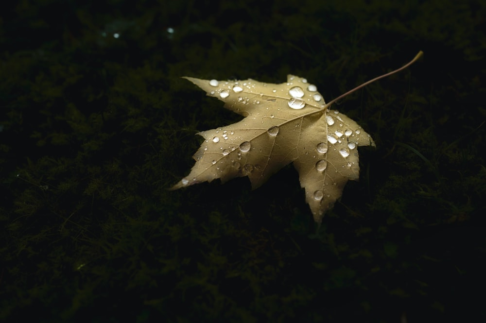 white and yellow star ornament