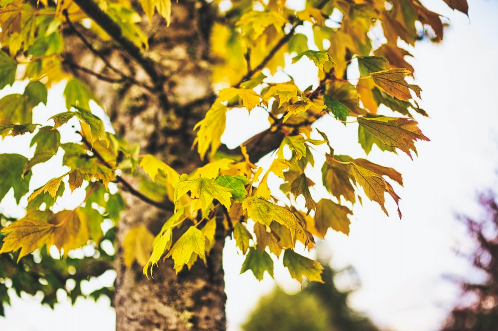 yellow and green leaves on tree