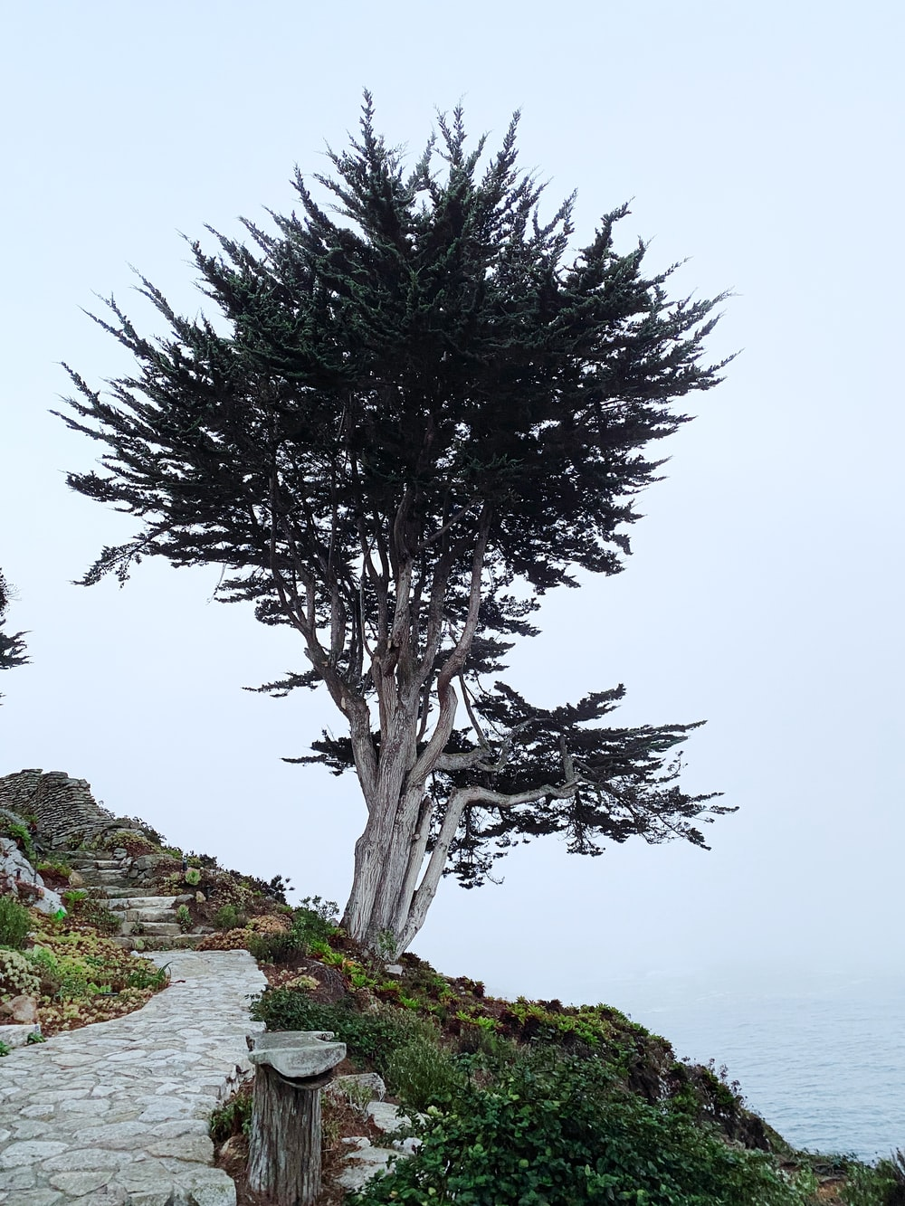 green tree on gray rock formation during daytime