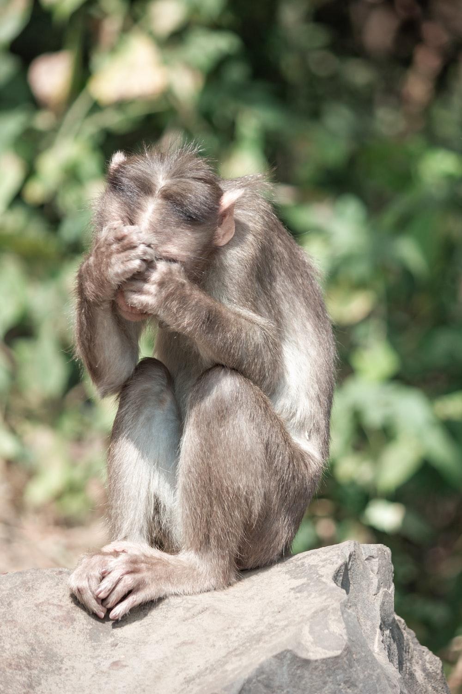 brown monkey on brown wooden log during daytime