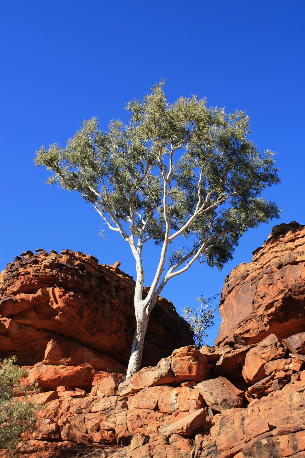 green tree on brown rock formation during daytime