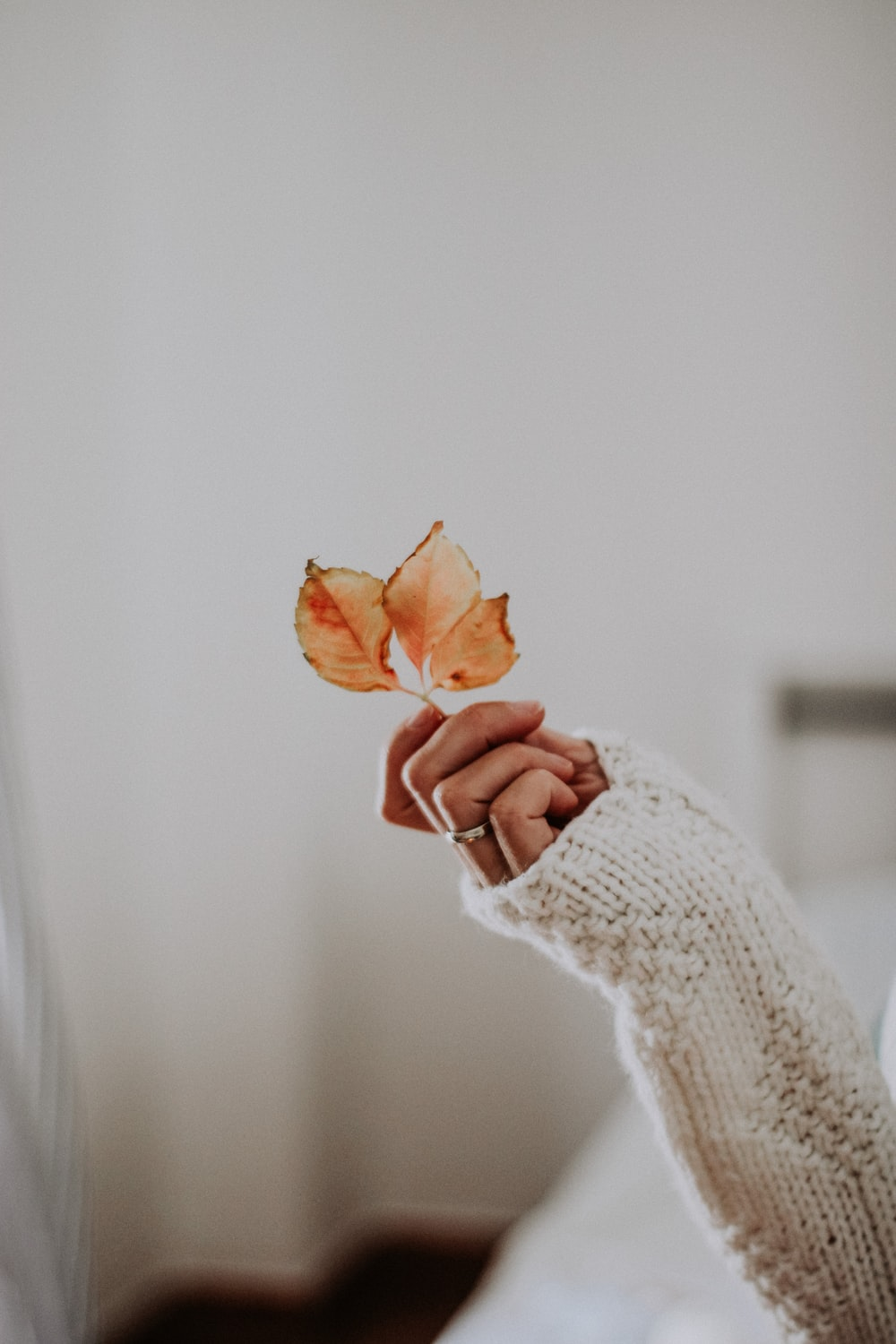 woman in white knit sweater holding brown flower