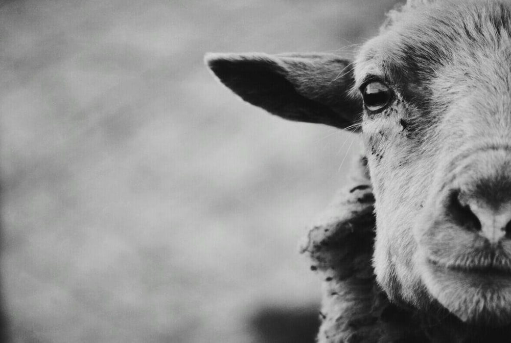 grayscale photo of a animal