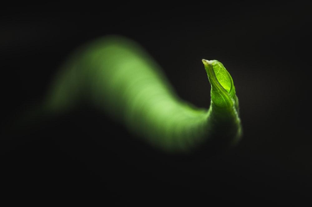green and white spiral illustration