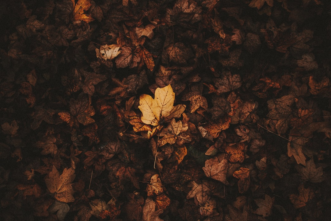 Brown Leaves On Brown Soil - unsplash