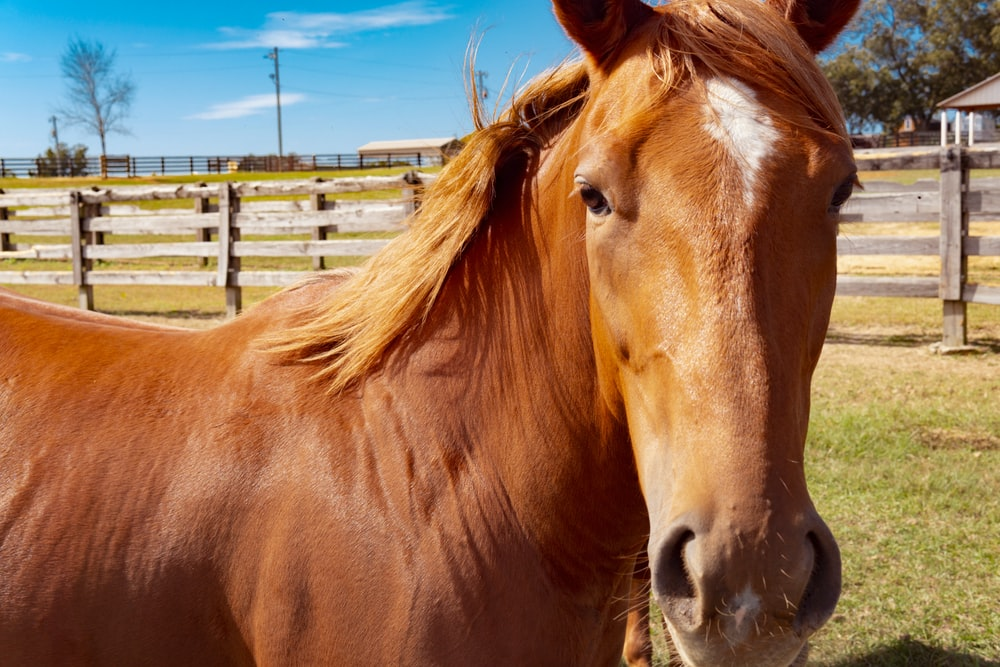 brown horse standing on brown wooden fence during daytime
