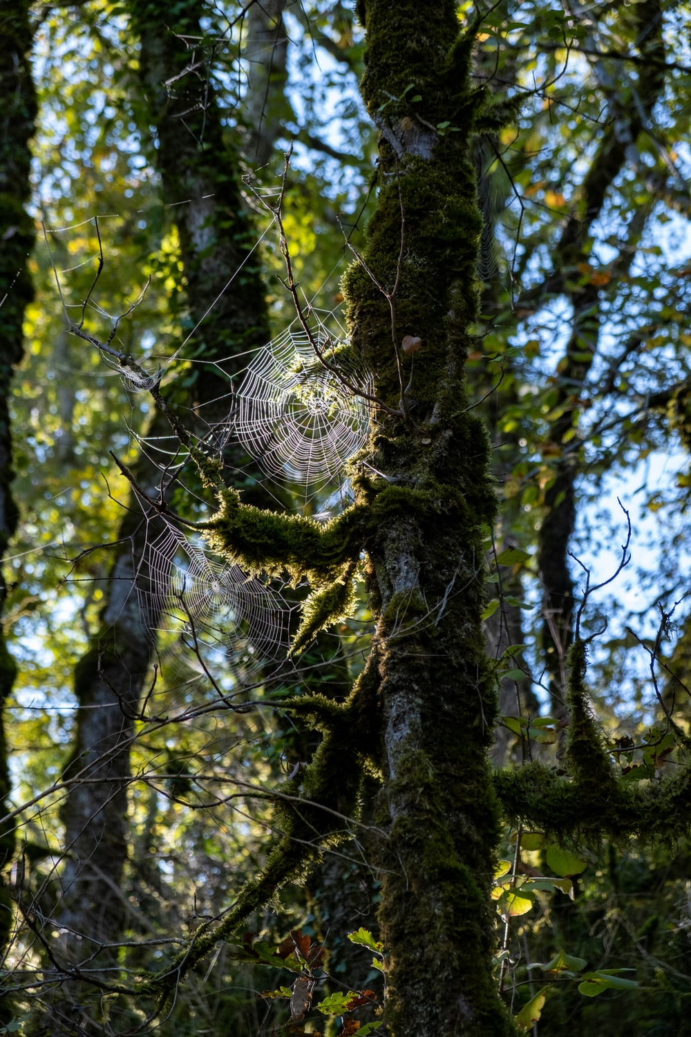 spider web on brown tree trunk during daytime