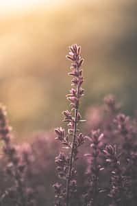 After death comes life lavender stories