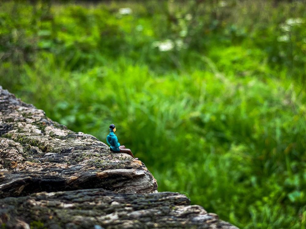 blue frog on brown rock