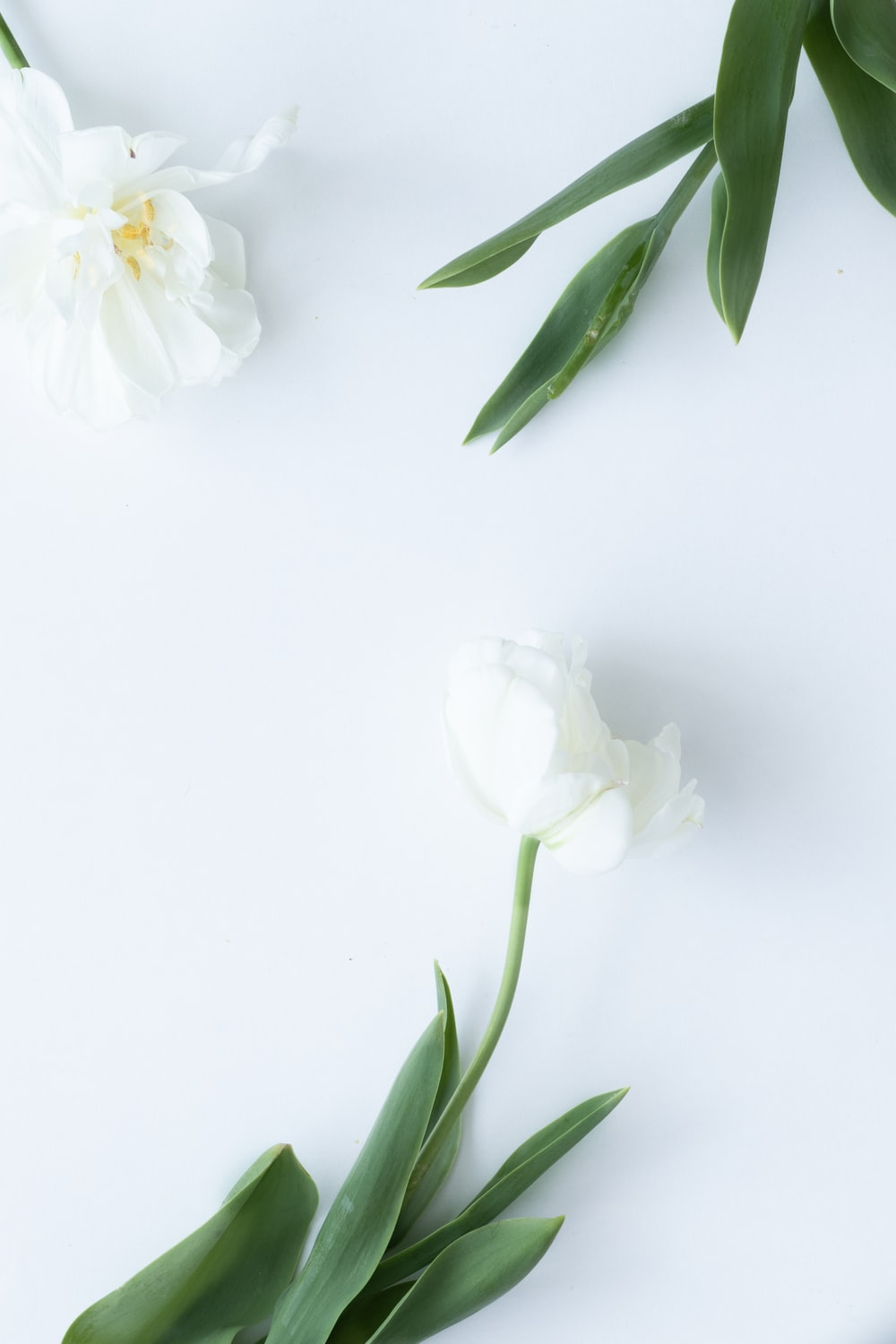 white flower with green leaves