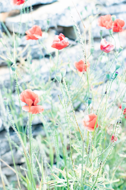 orange flower in the field