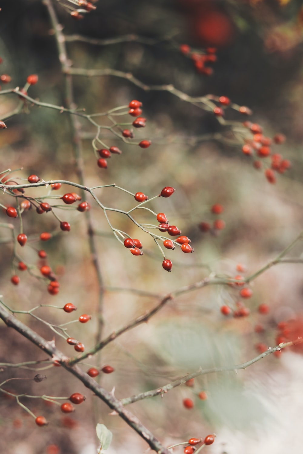 red and white round fruits