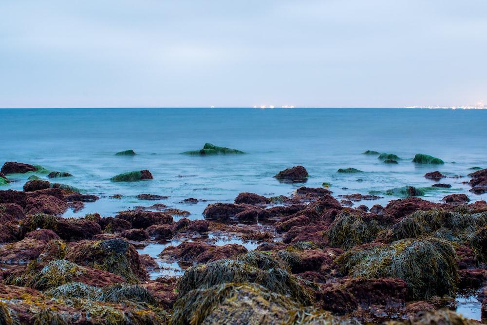 brown rocks on sea shore during daytime
