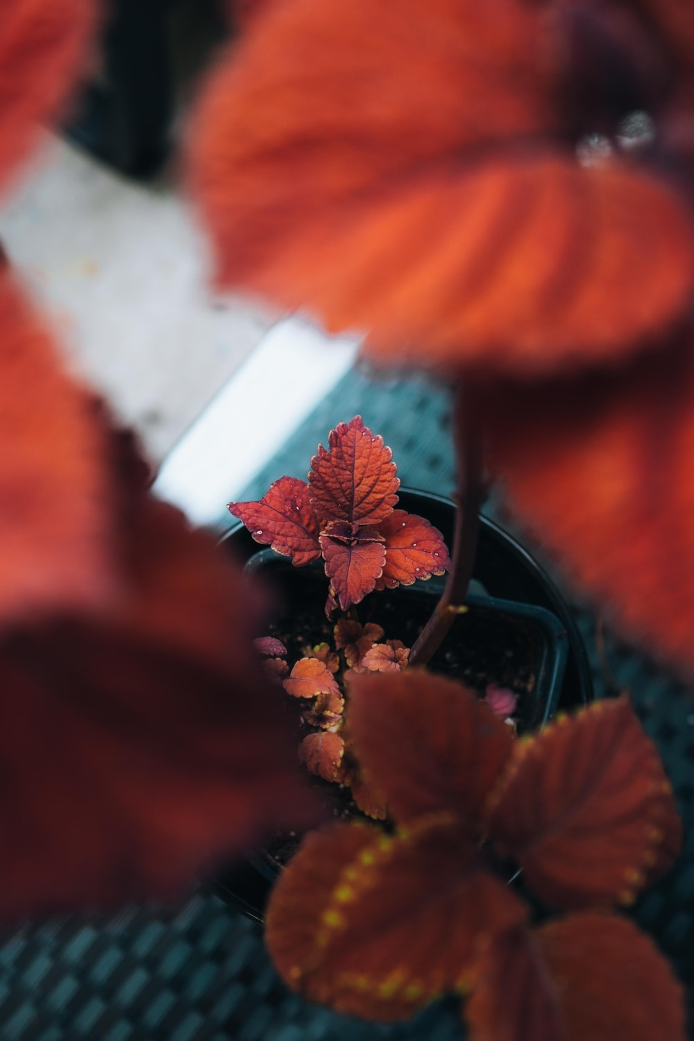 red flower in green plant pot
