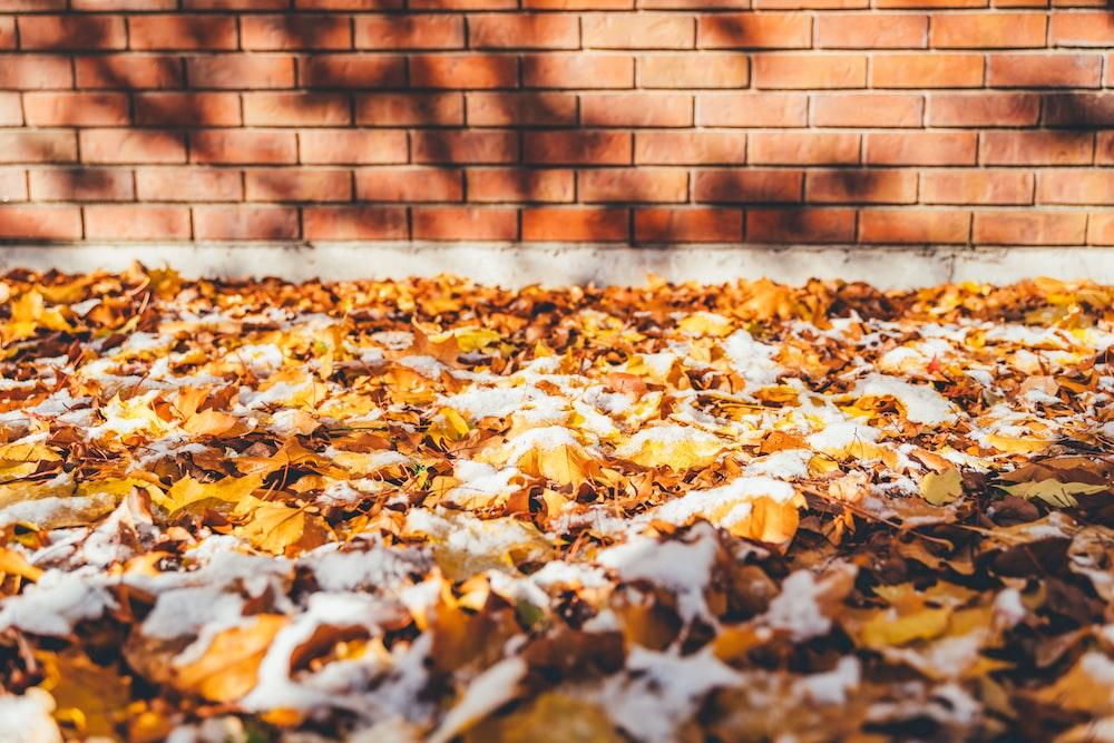 brown leaves on ground beside brown brick wall