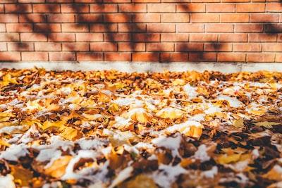 brown leaves on ground beside brown brick wall montana teams background