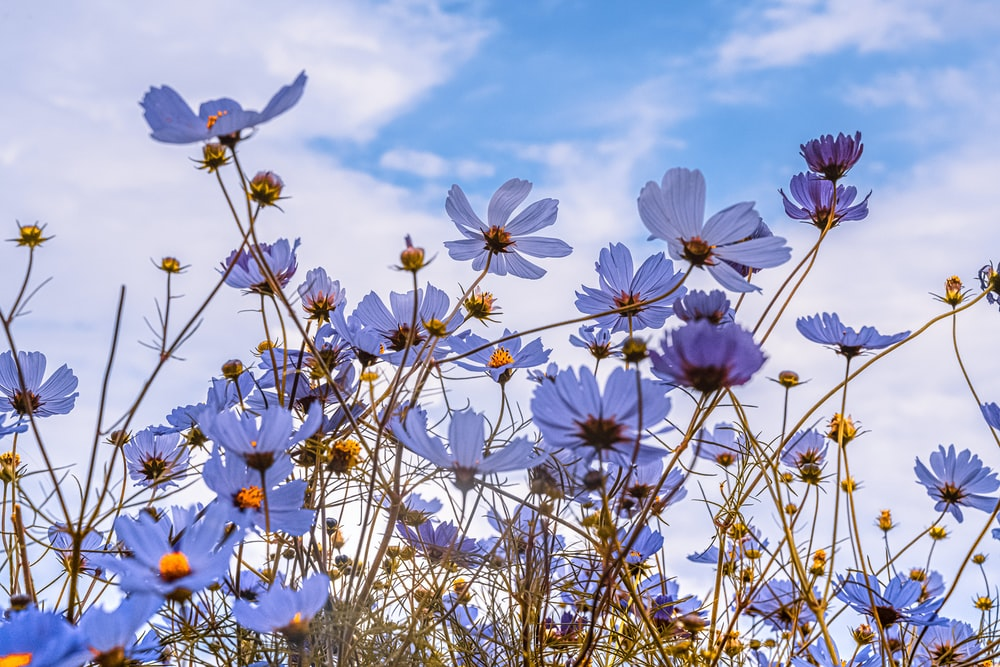 white and pink flowers under blue sky during daytime