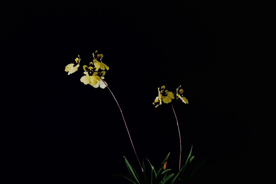 Orchid In Bloom - unsplash
