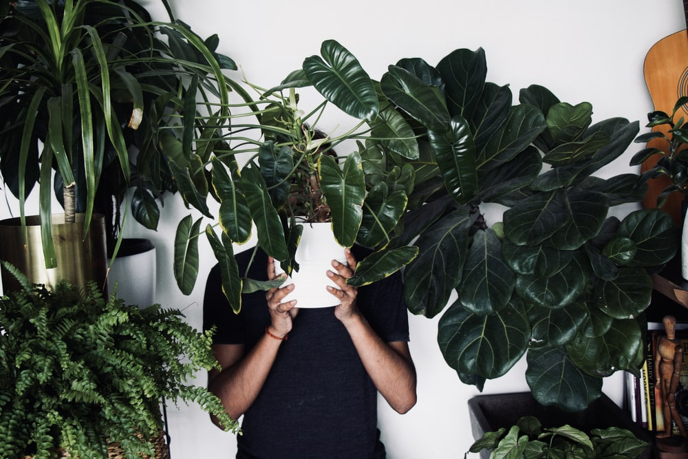 person in black t-shirt holding green plant