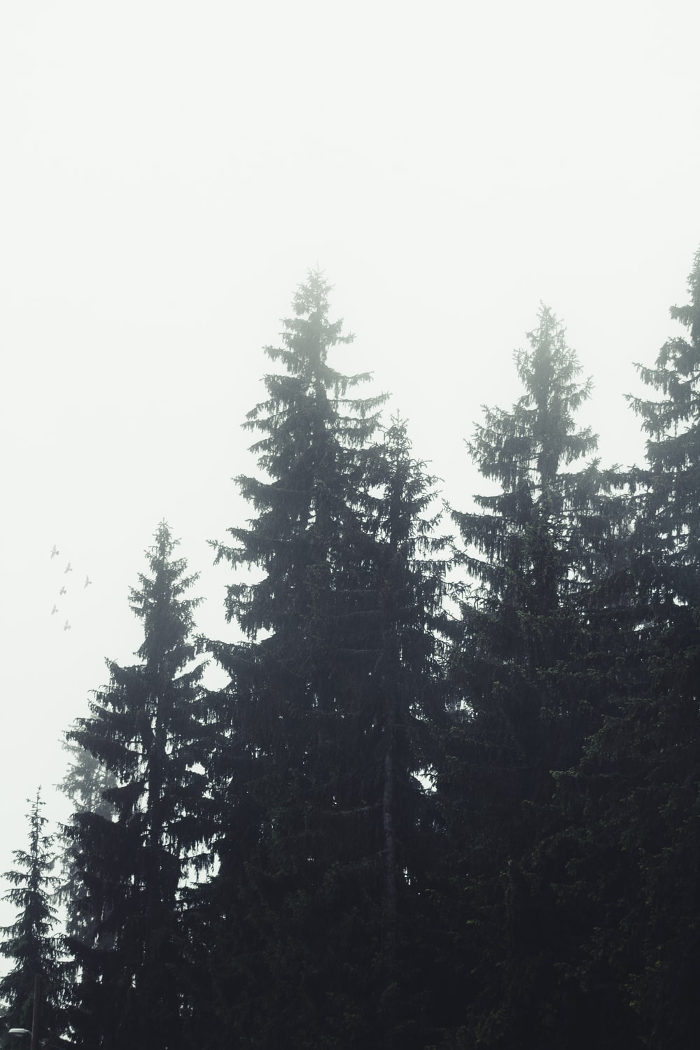 green pine trees under white sky during daytime
