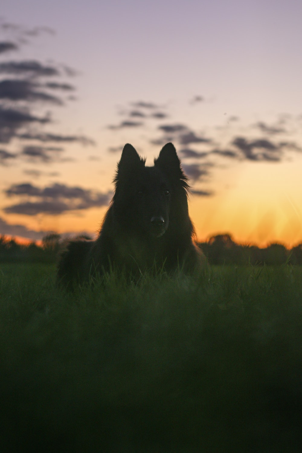 black long coated dog on green grass field during sunset
