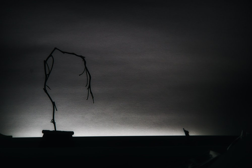 silhouette of bare tree during daytime