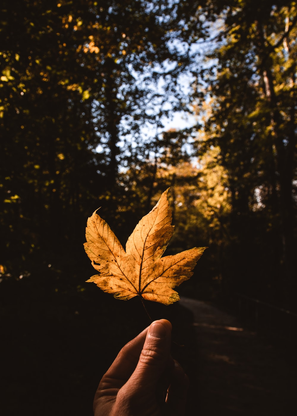 brown leaf on persons hand
