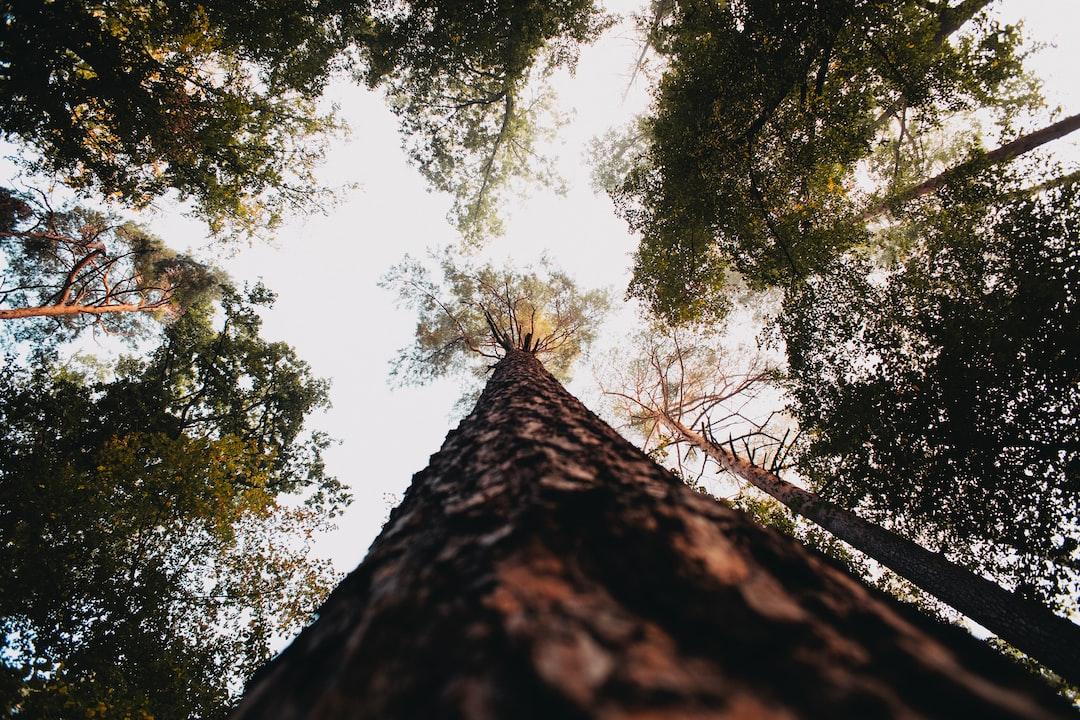 Forrest. Made With Analog Vintage Lens, Carl Zeiss Jena Flektogon Red Mc 2.8 20mm (year: 1976) - unsplash