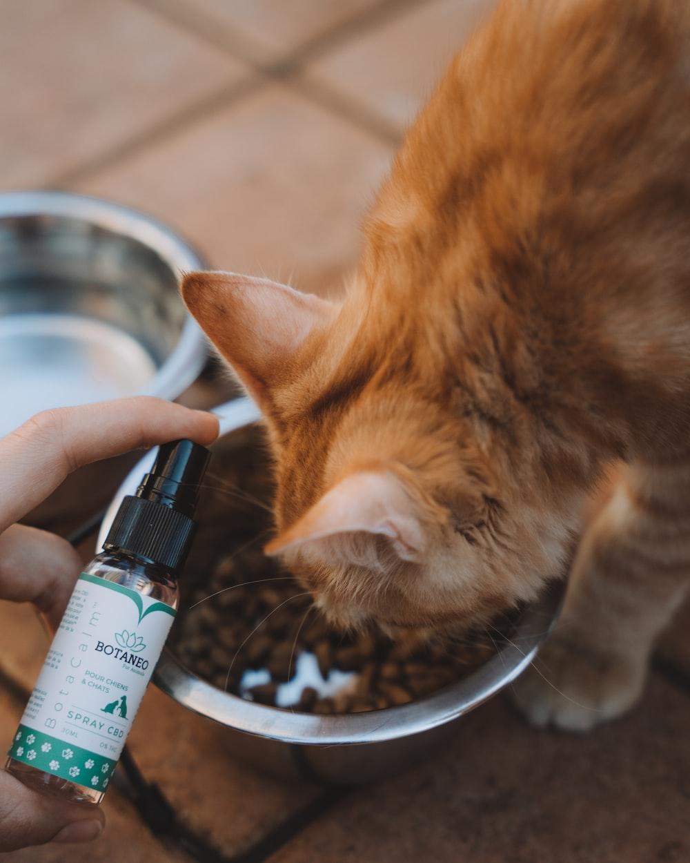orange tabby cat drinking from black bottle