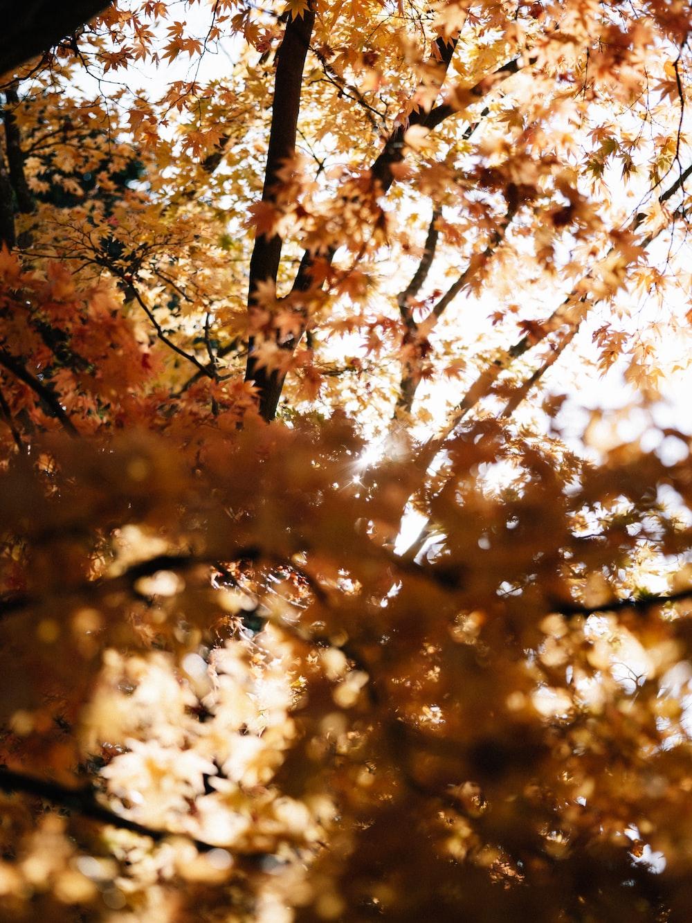 brown leaves on brown tree