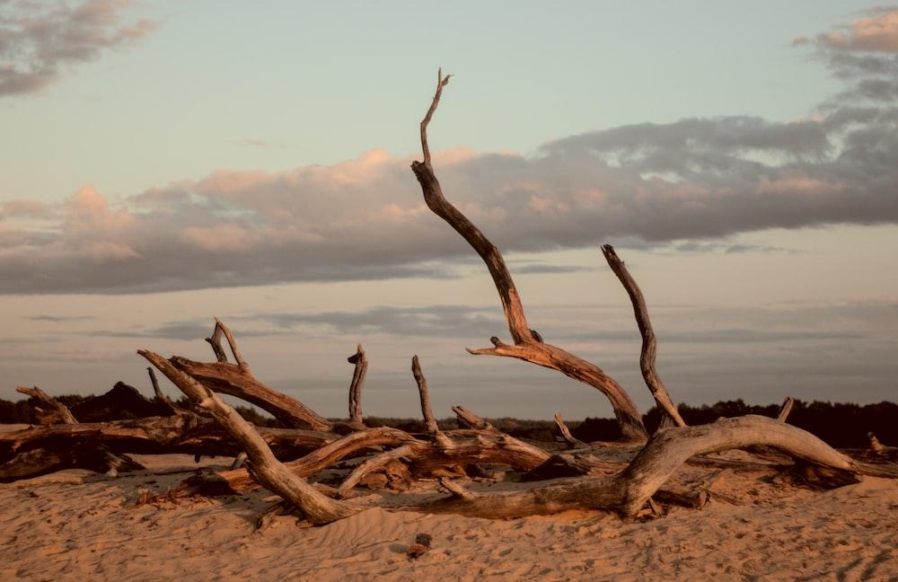 brown wood log on brown sand during daytime
