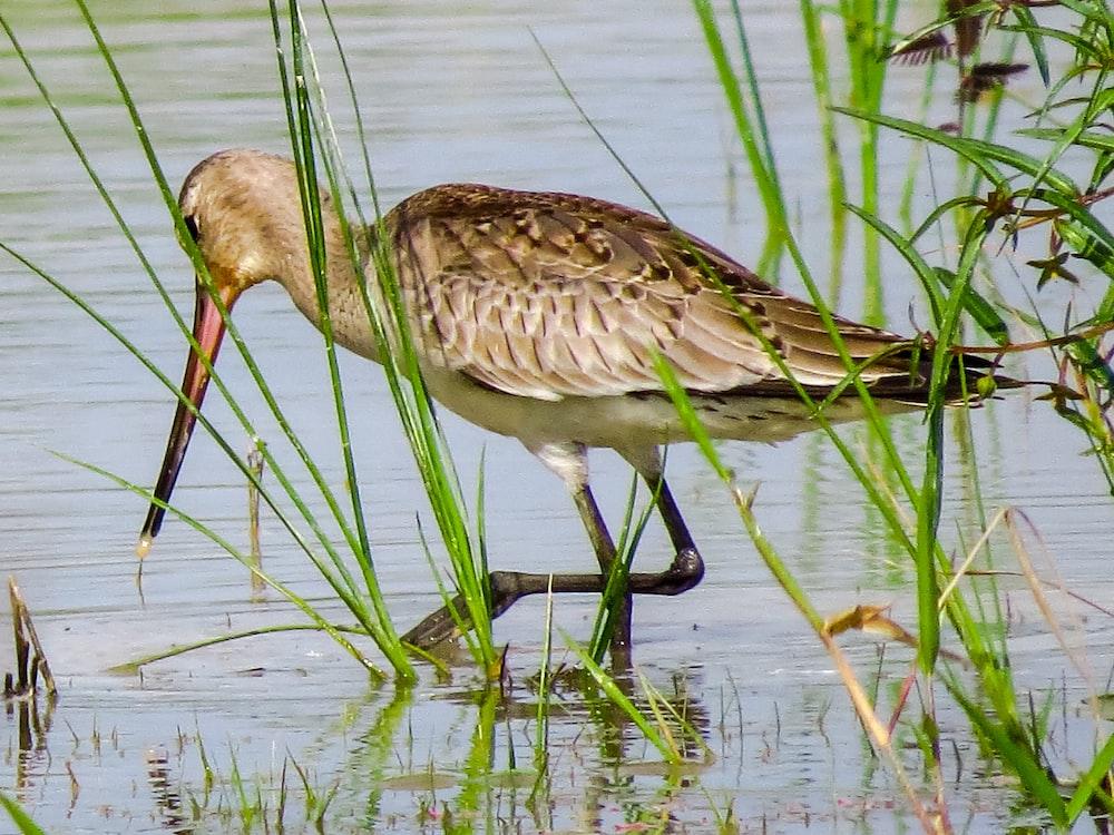 brown bird on body of water during daytime