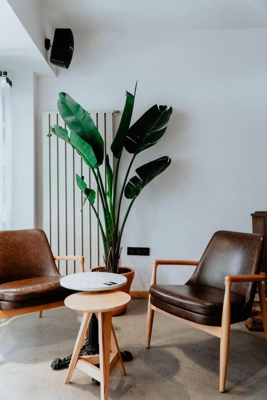 green indoor plant beside brown wooden table