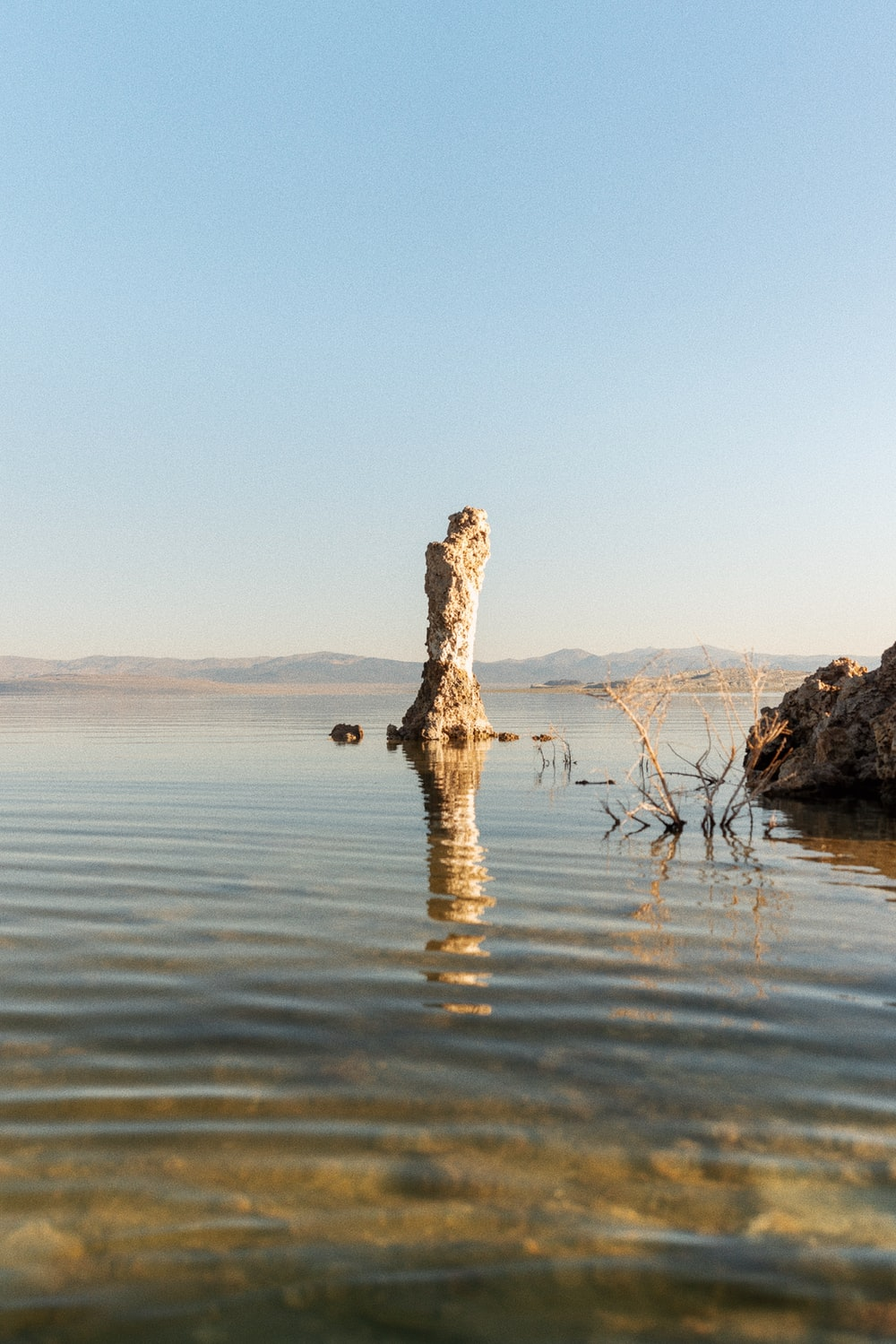 brown tree trunk on water during daytime