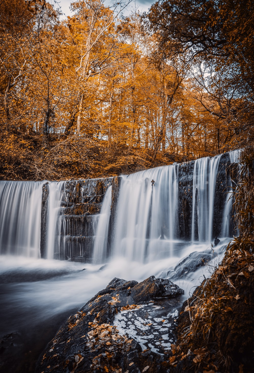 water falls in the middle of brown trees