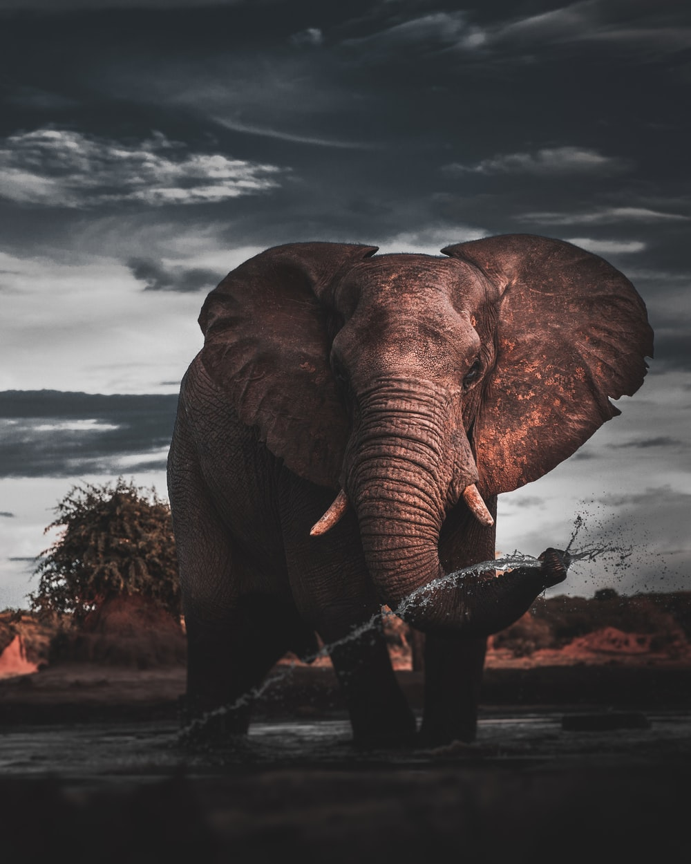 brown elephant standing on brown field during daytime
