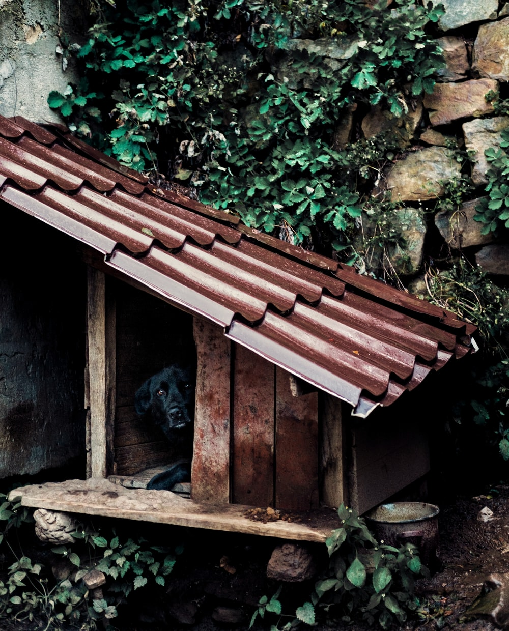 black cat on brown wooden roof