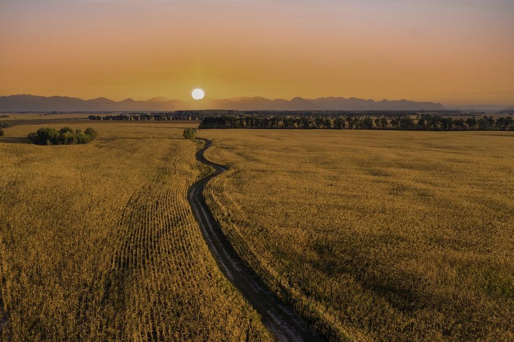 brown field under orange sky during sunset