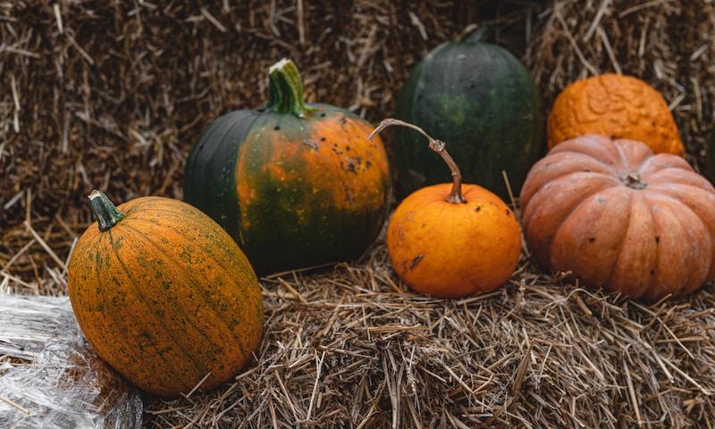 8 bonnes raisons de manger du potiron en dehors d'Hallowen