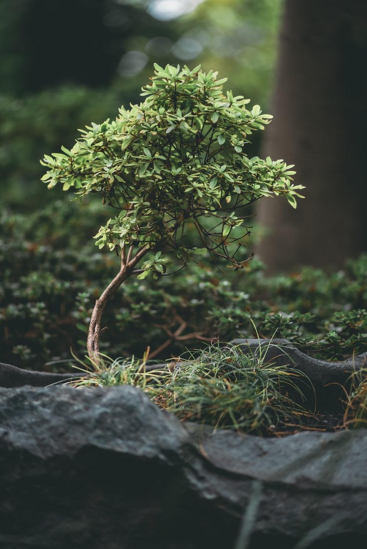 green plant on gray rock