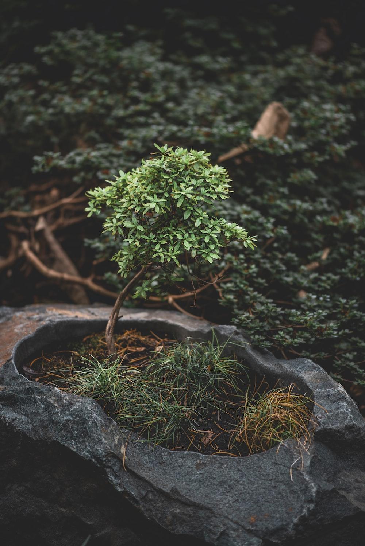 green plant on black rock