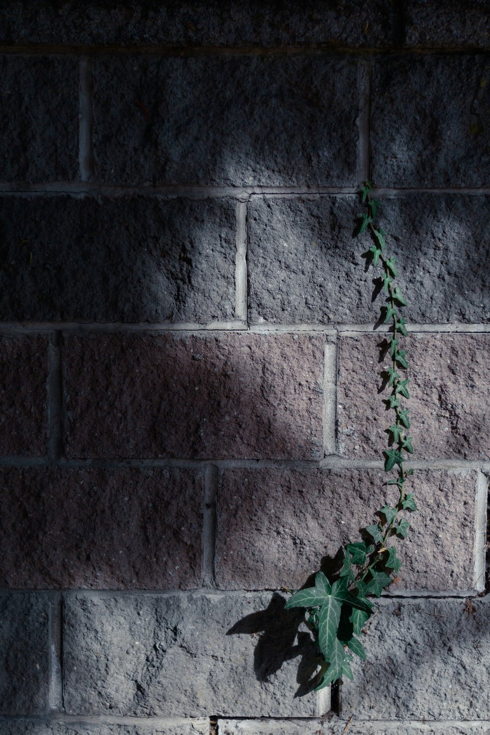 green vines on gray concrete wall