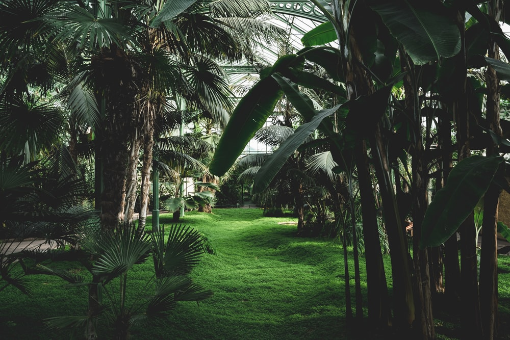 green palm trees on green grass field during daytime