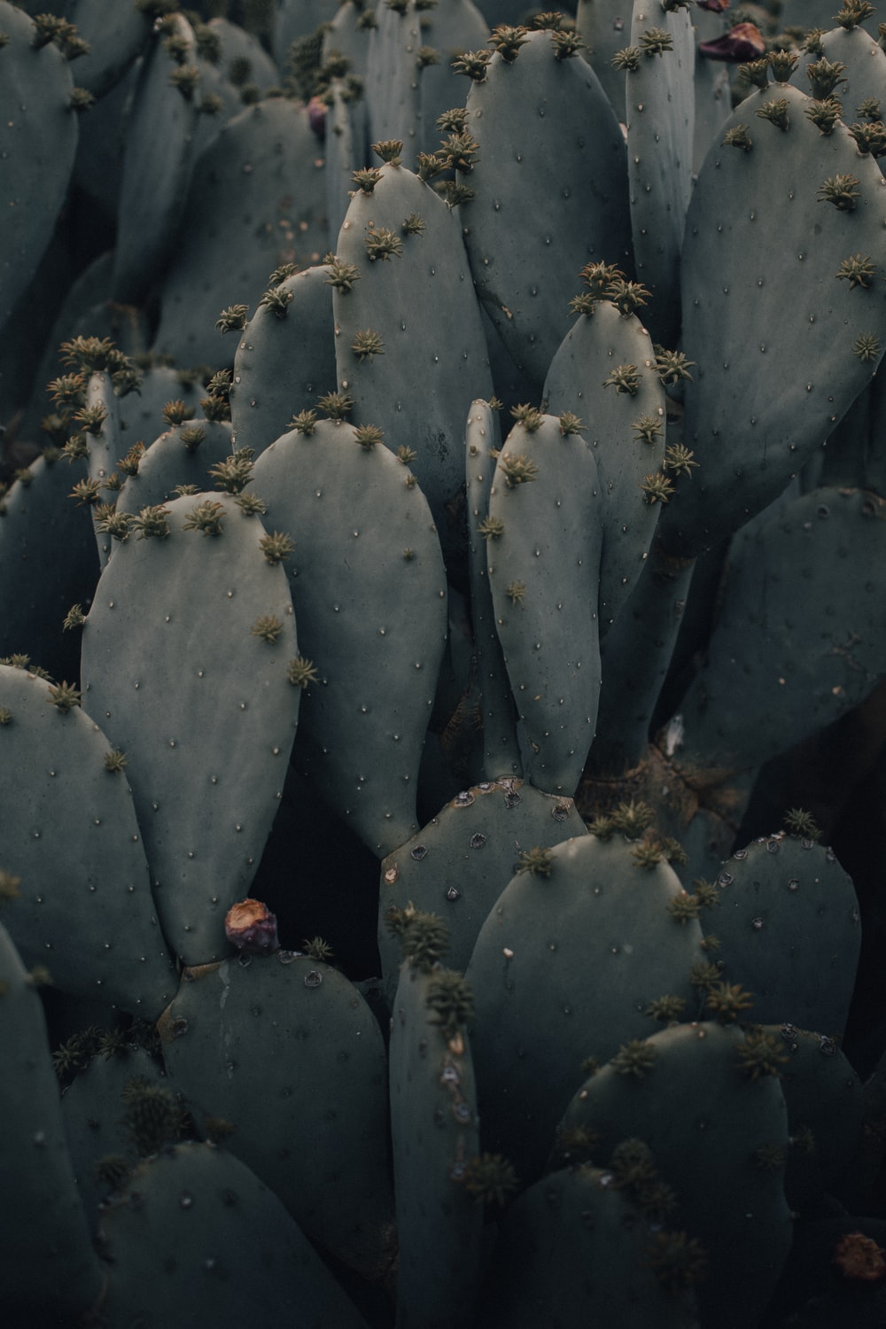 green cactus plant in close up photography