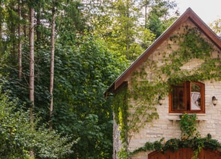 stone house in the forest with vines