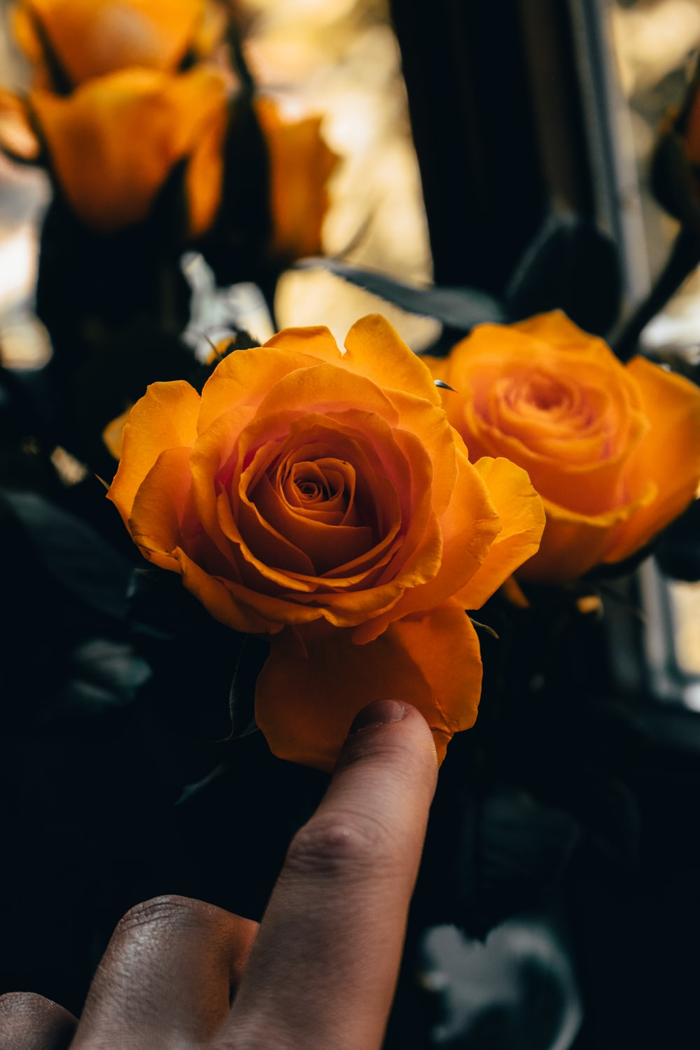 person holding orange rose in close up photography