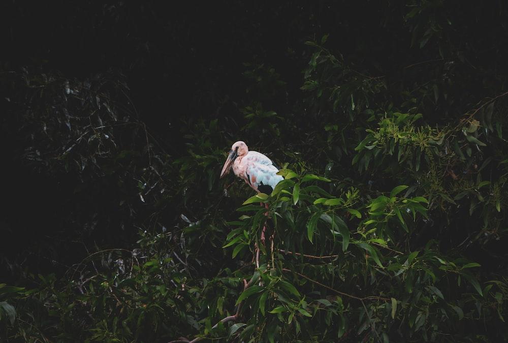 white bird on green plant